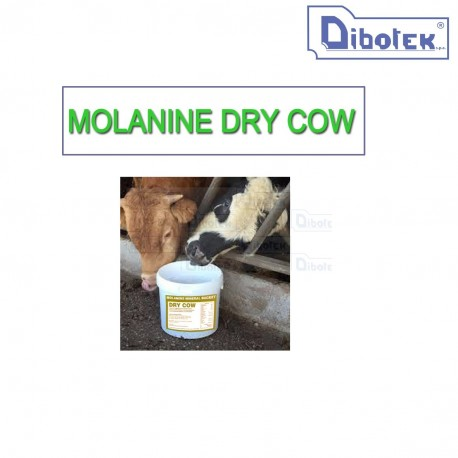 Molamins Dry Cow kg.80