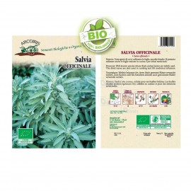 Salvia Officinale BIO Gr. 3
